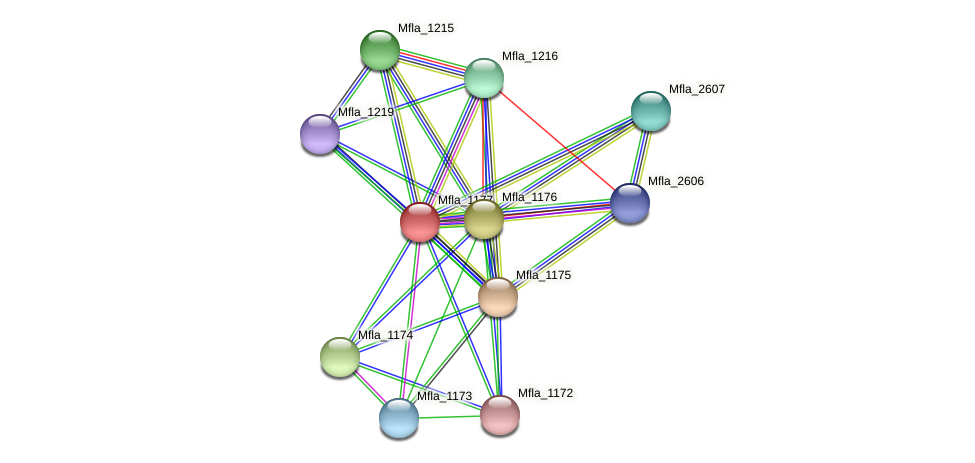 Mfla_1177 protein (Methylobacillus flagellatus) - STRING interaction network