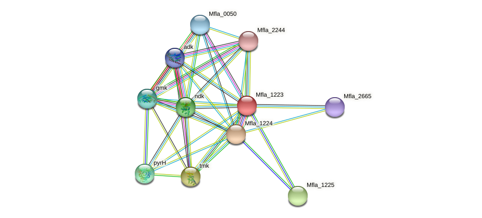 Mfla_1223 protein (Methylobacillus flagellatus) - STRING interaction network