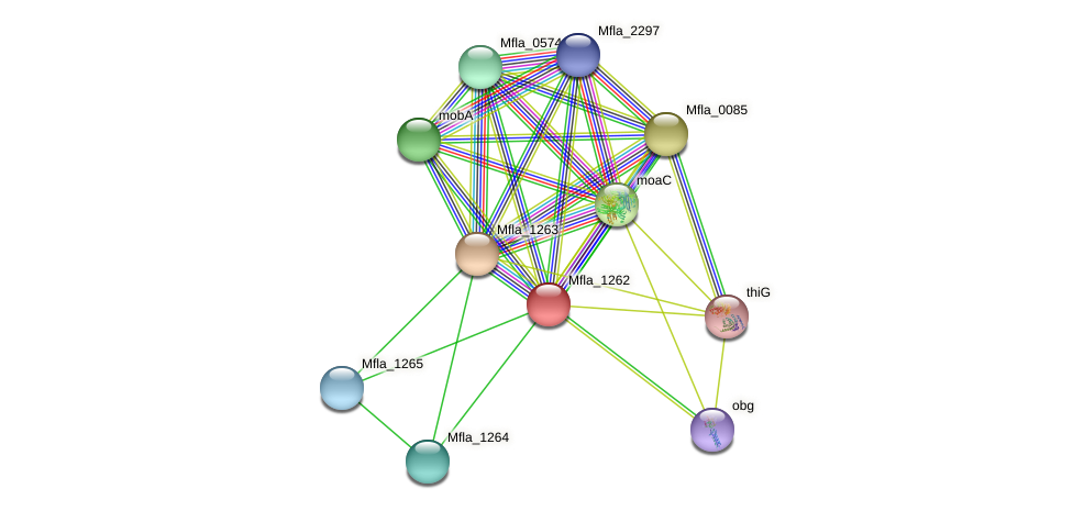 moaD protein (Methylobacillus flagellatus) - STRING interaction network