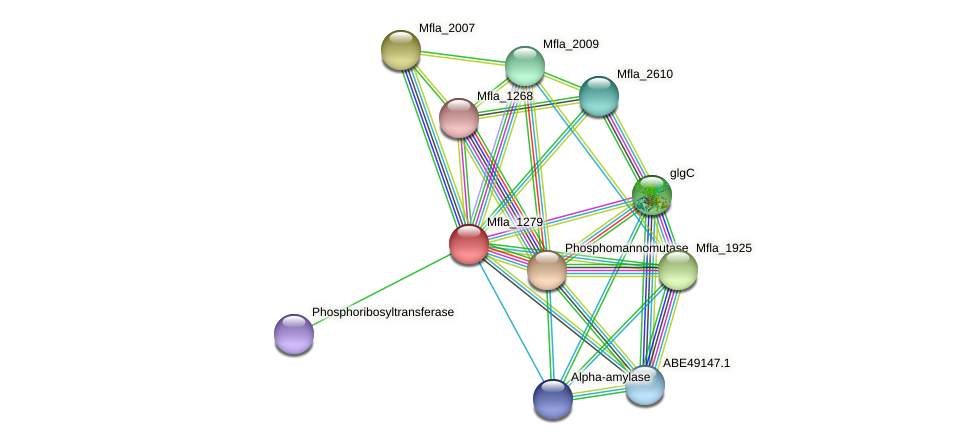 Mfla_1279 protein (Methylobacillus flagellatus) - STRING interaction network