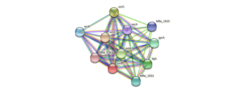 uvrB protein (Methylobacillus flagellatus) - STRING interaction network
