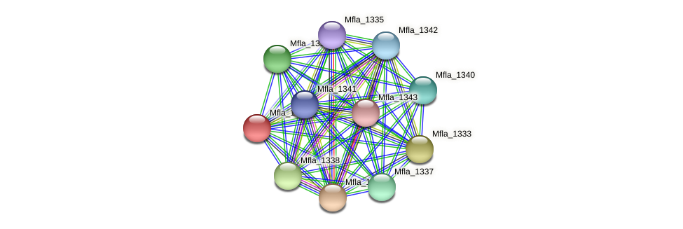 Mfla_1334 protein (Methylobacillus flagellatus) - STRING interaction network
