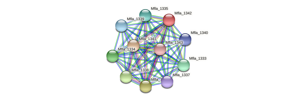 Mfla_1342 protein (Methylobacillus flagellatus) - STRING interaction network