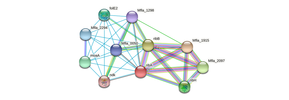 ribA protein (Methylobacillus flagellatus) - STRING interaction network
