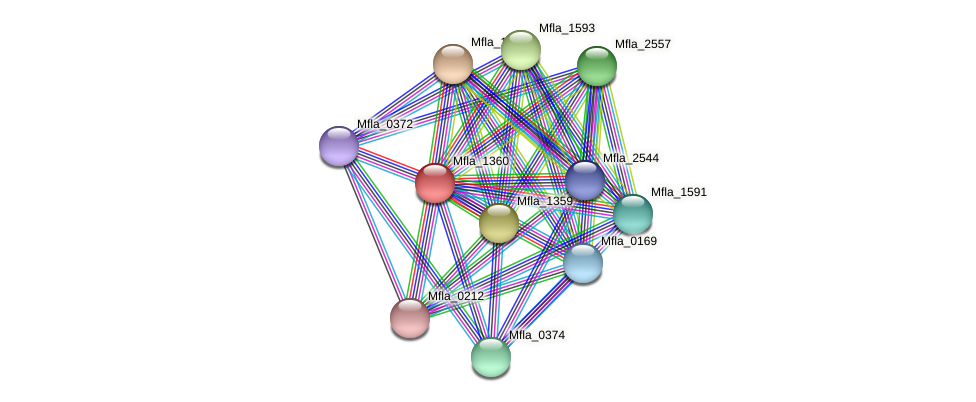 Mfla_1360 protein (Methylobacillus flagellatus) - STRING interaction network