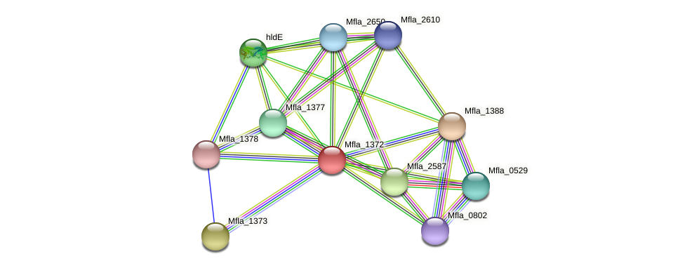 Mfla_1372 protein (Methylobacillus flagellatus) - STRING interaction network
