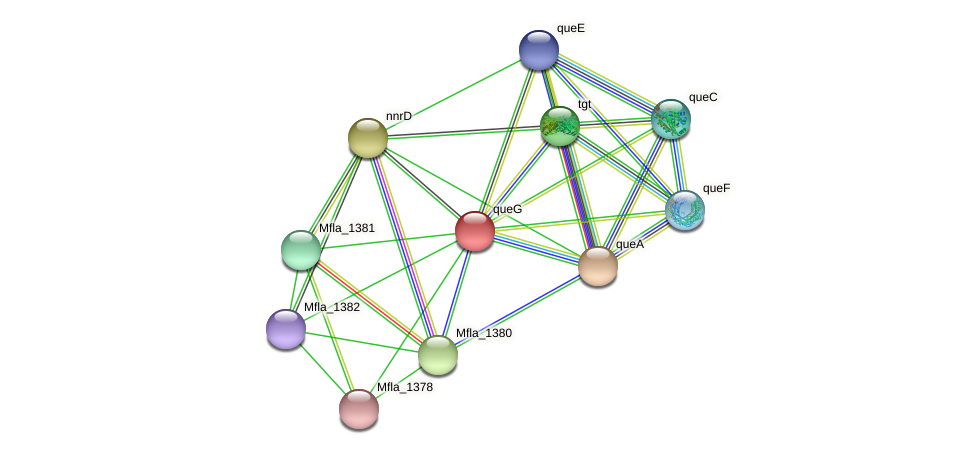 queG protein (Methylobacillus flagellatus) - STRING interaction network