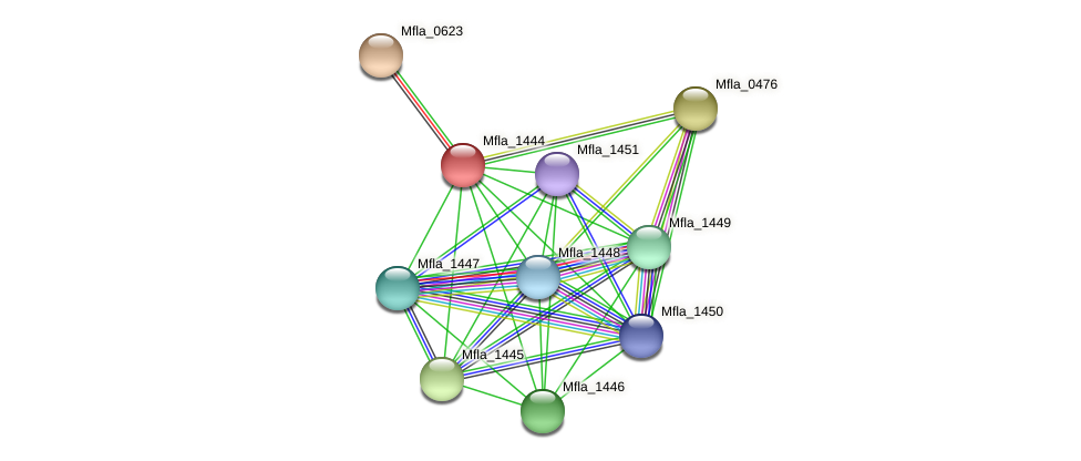 Mfla_1444 protein (Methylobacillus flagellatus) - STRING interaction network