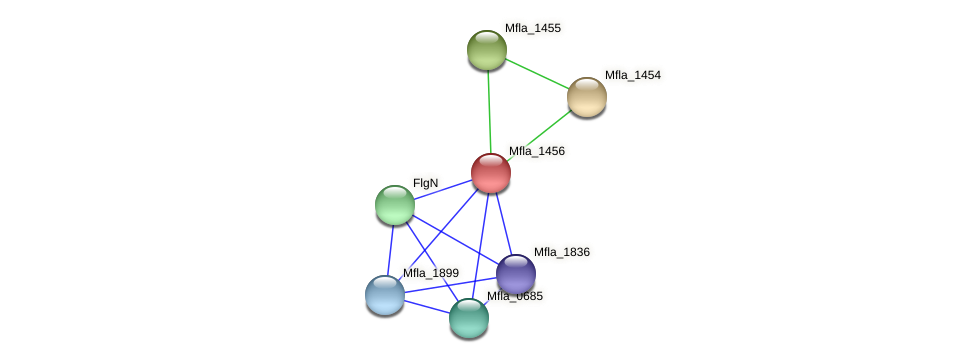 Mfla_1456 protein (Methylobacillus flagellatus) - STRING interaction network