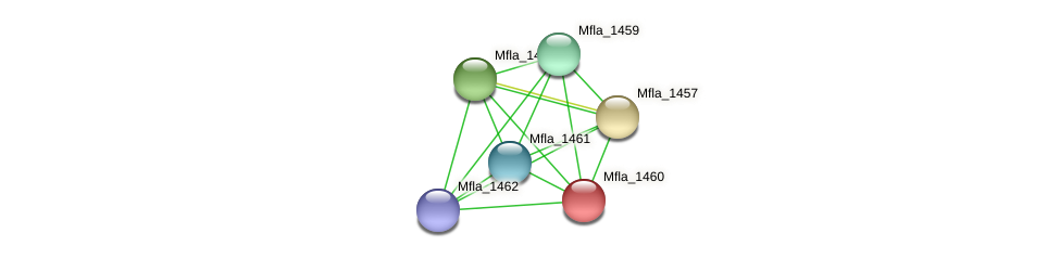 Mfla_1460 protein (Methylobacillus flagellatus) - STRING interaction network