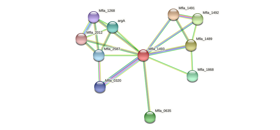 Mfla_1493 protein (Methylobacillus flagellatus) - STRING interaction network