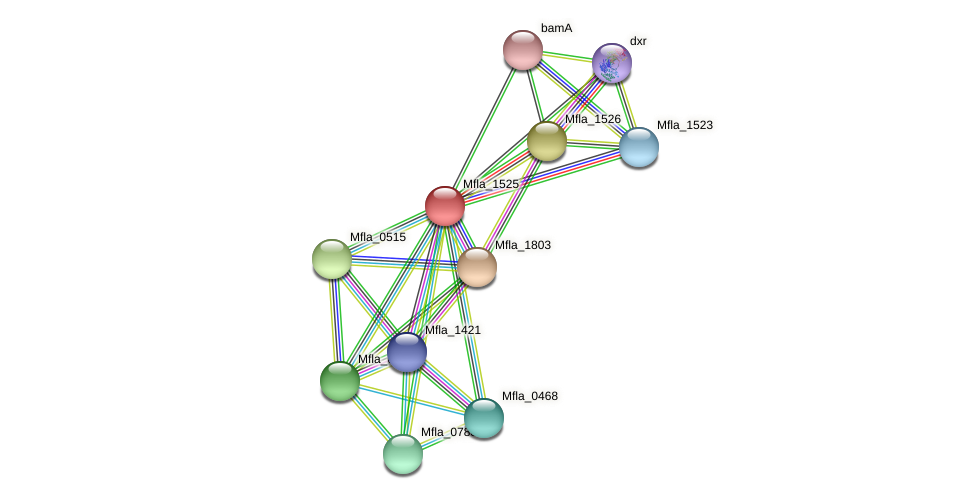 Mfla_1525 protein (Methylobacillus flagellatus) - STRING interaction network