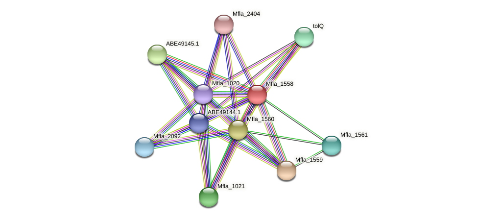 Mfla_1558 protein (Methylobacillus flagellatus) - STRING interaction network