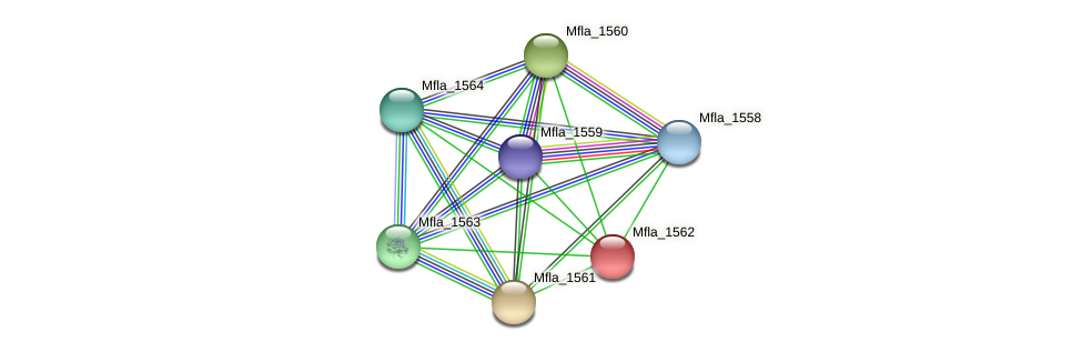 Mfla_1562 protein (Methylobacillus flagellatus) - STRING interaction network