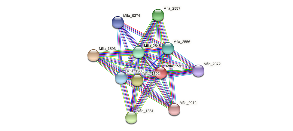Mfla_1591 protein (Methylobacillus flagellatus) - STRING interaction network
