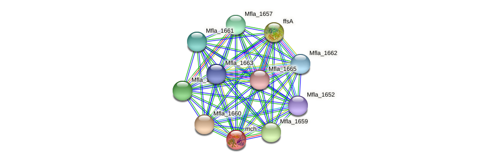 mch protein (Methylobacillus flagellatus) - STRING interaction network