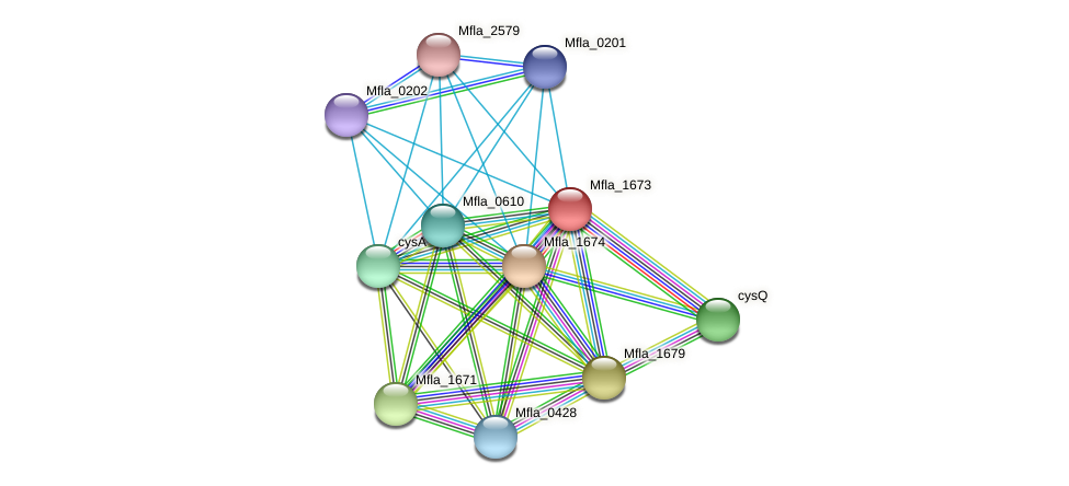 Mfla_1673 protein (Methylobacillus flagellatus) - STRING interaction network