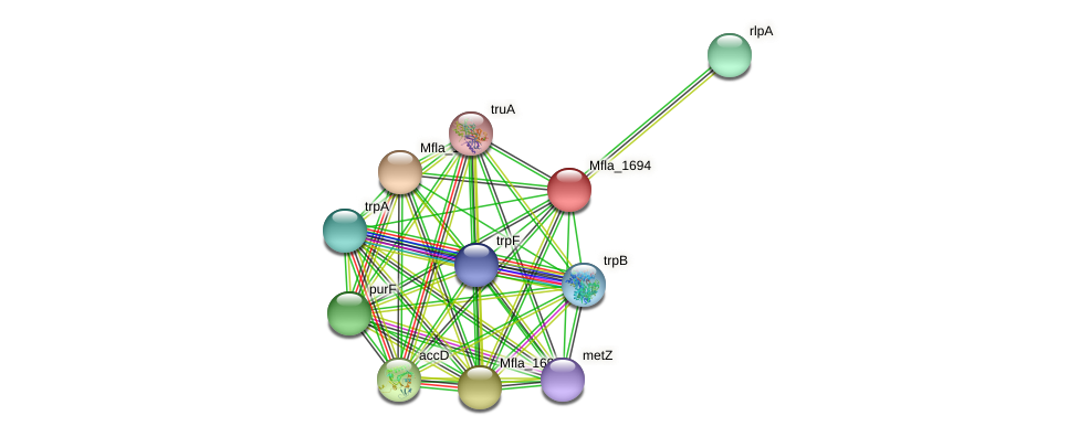 Mfla_1694 protein (Methylobacillus flagellatus) - STRING interaction network