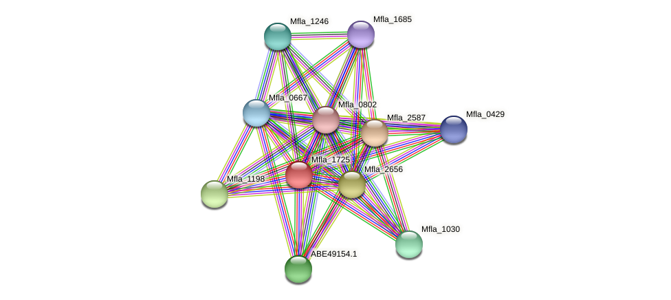 Mfla_1725 protein (Methylobacillus flagellatus) - STRING interaction network
