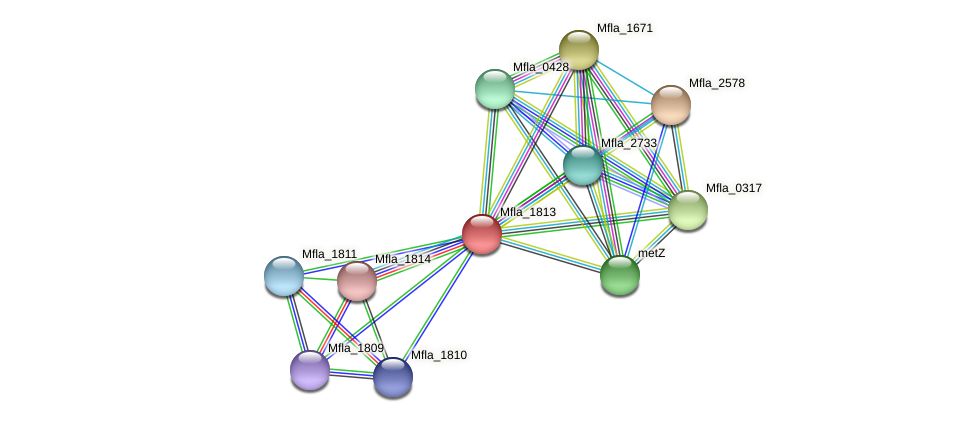 Mfla_1813 protein (Methylobacillus flagellatus) - STRING interaction network