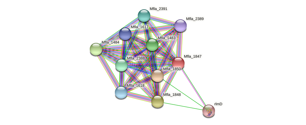 Mfla_1847 protein (Methylobacillus flagellatus) - STRING interaction network