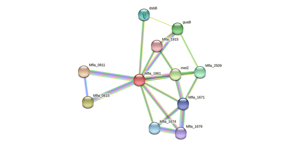 Mfla_1861 protein (Methylobacillus flagellatus) - STRING interaction network