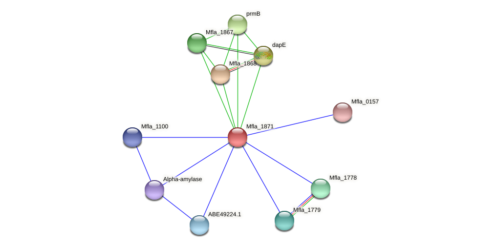 Mfla_1871 protein (Methylobacillus flagellatus) - STRING interaction network