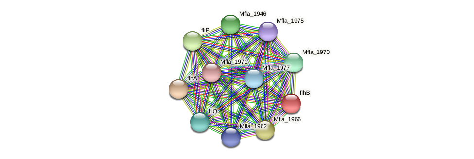Mfla_1944 protein (Methylobacillus flagellatus) - STRING interaction network