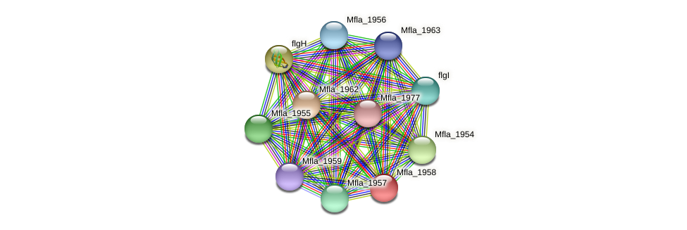 Mfla_1958 protein (Methylobacillus flagellatus) - STRING interaction network