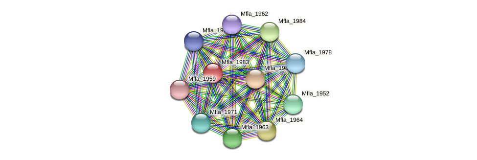 Mfla_1983 protein (Methylobacillus flagellatus) - STRING interaction network