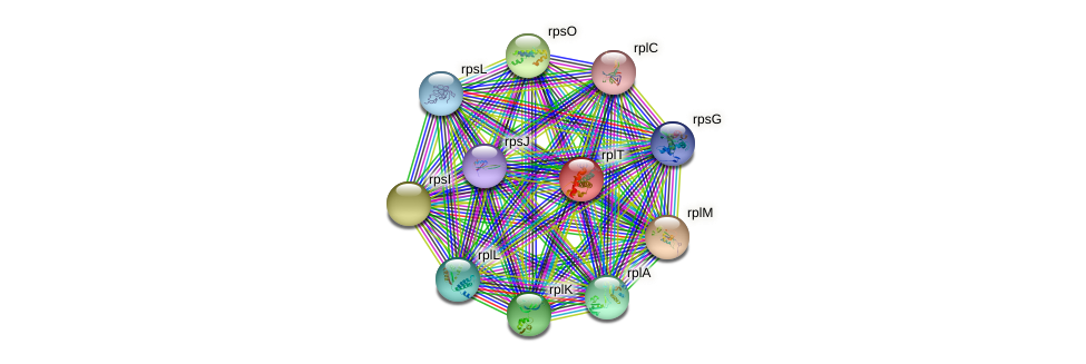rplT protein (Methylobacillus flagellatus) - STRING interaction network