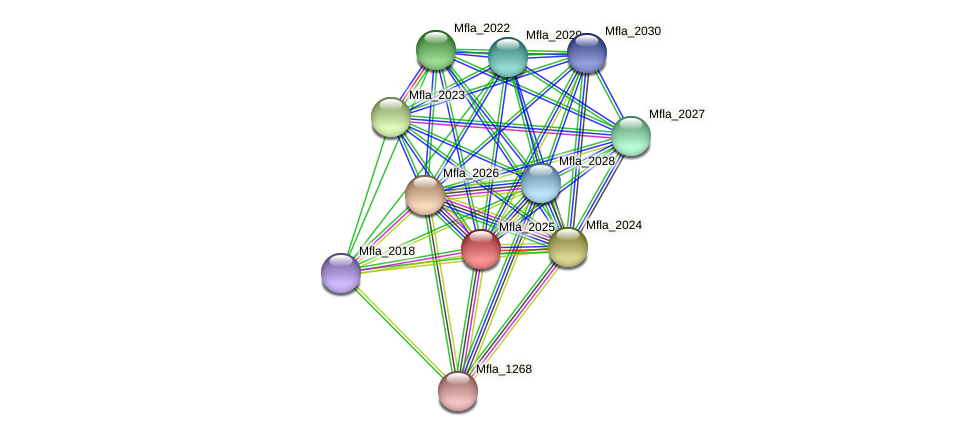 Mfla_2025 protein (Methylobacillus flagellatus) - STRING interaction network