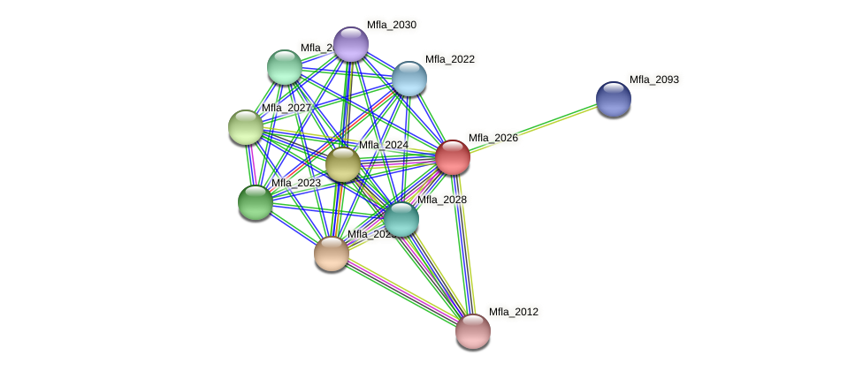 Mfla_2026 protein (Methylobacillus flagellatus) - STRING interaction network