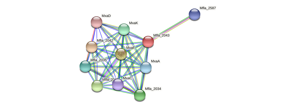 Mfla_2043 protein (Methylobacillus flagellatus) - STRING interaction network