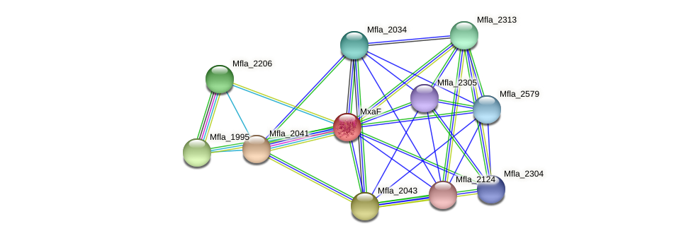 Mfla_2044 protein (Methylobacillus flagellatus) - STRING interaction network