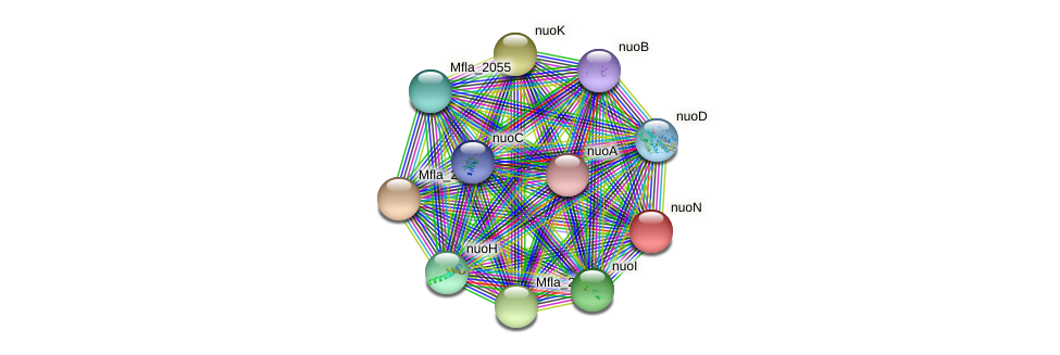 nuoN protein (Methylobacillus flagellatus) - STRING interaction network