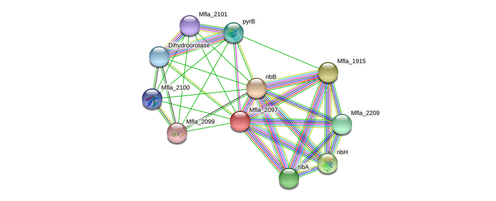 Mfla_2097 protein (Methylobacillus flagellatus) - STRING interaction network