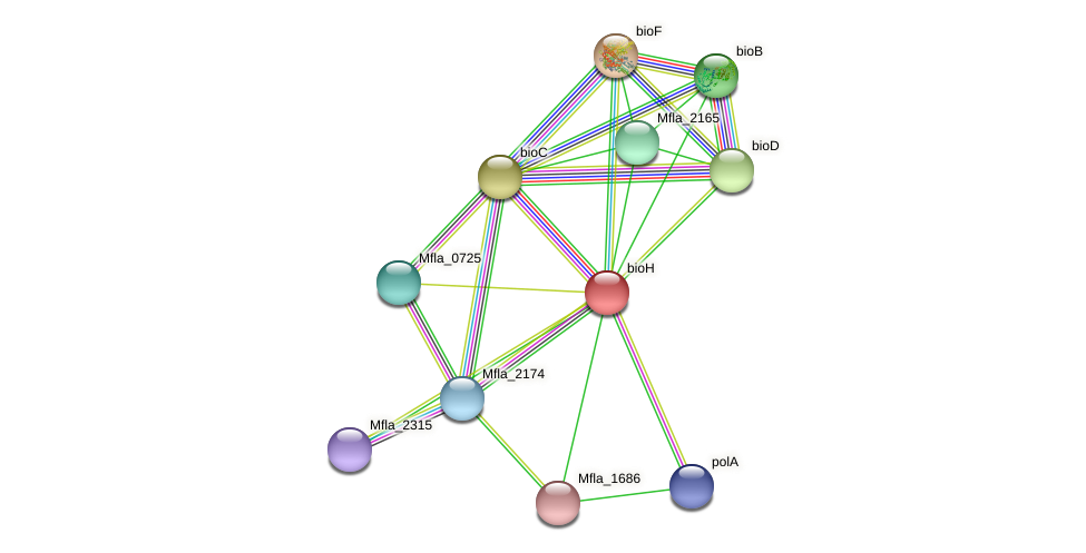 bioH protein (Methylobacillus flagellatus) - STRING interaction network