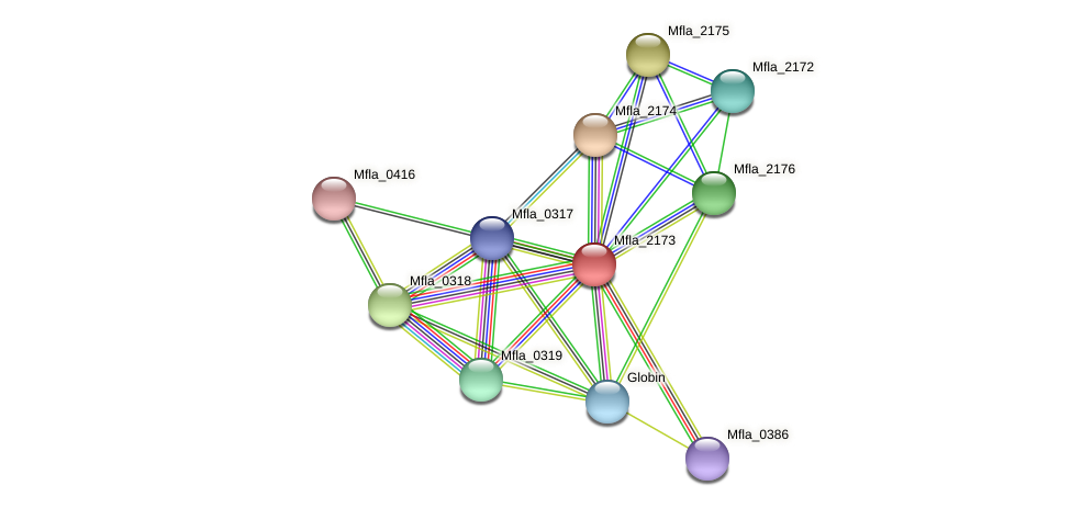 Mfla_2173 protein (Methylobacillus flagellatus) - STRING interaction network