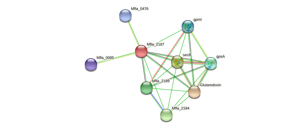 Mfla_2187 protein (Methylobacillus flagellatus) - STRING interaction network