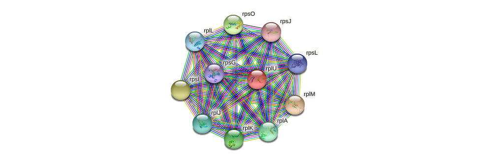 rplU protein (Methylobacillus flagellatus) - STRING interaction network