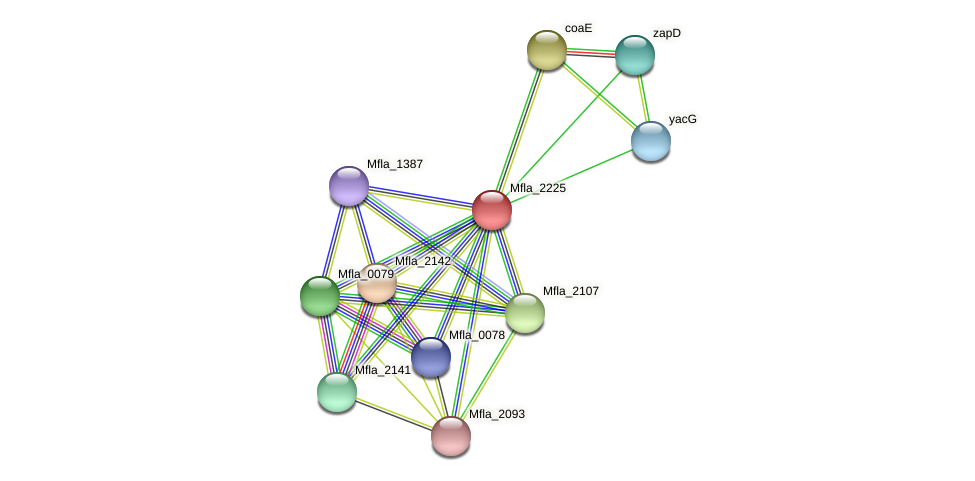 Mfla_2225 protein (Methylobacillus flagellatus) - STRING interaction network