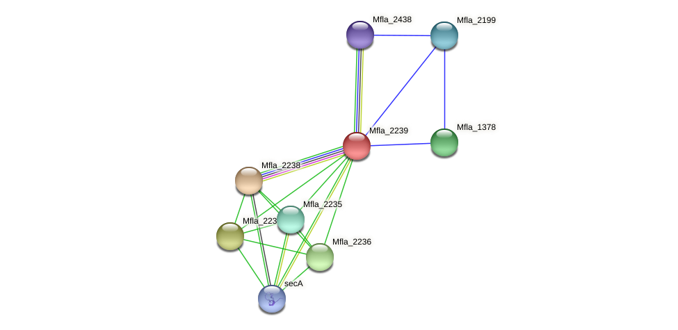 Mfla_2239 protein (Methylobacillus flagellatus) - STRING interaction network