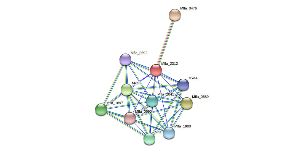 Mfla_2312 protein (Methylobacillus flagellatus) - STRING interaction network
