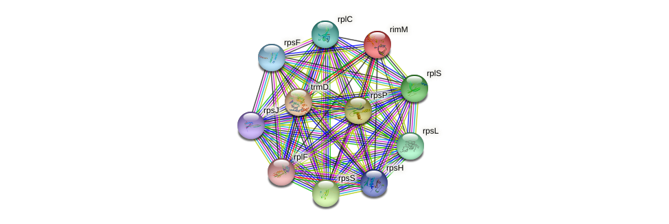rimM protein (Methylobacillus flagellatus) - STRING interaction network