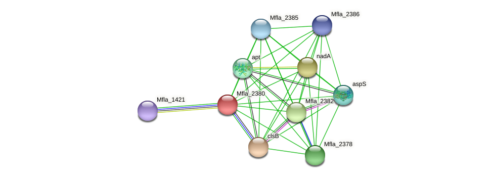 Mfla_2380 protein (Methylobacillus flagellatus) - STRING interaction network