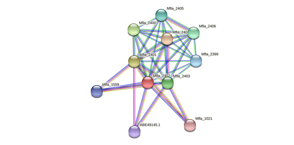 Mfla_2402 protein (Methylobacillus flagellatus) - STRING interaction network