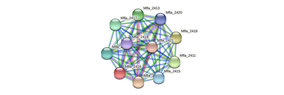 Mfla_2416 protein (Methylobacillus flagellatus) - STRING interaction network