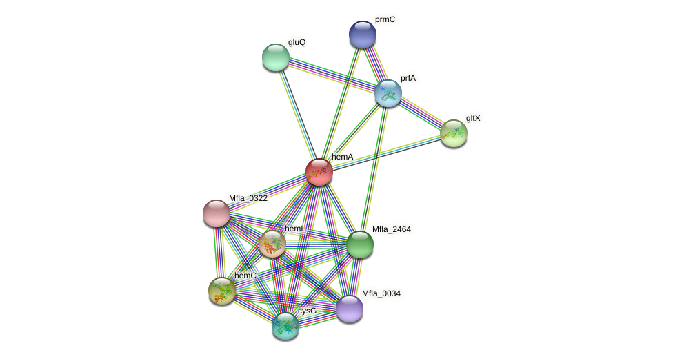 hemA protein (Methylobacillus flagellatus) - STRING interaction network