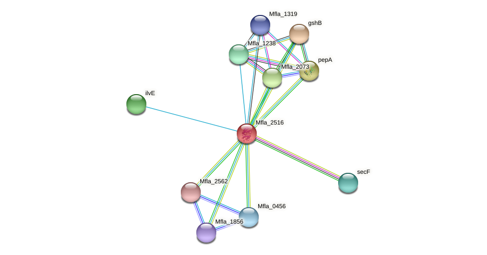 Mfla_2516 protein (Methylobacillus flagellatus) - STRING interaction network